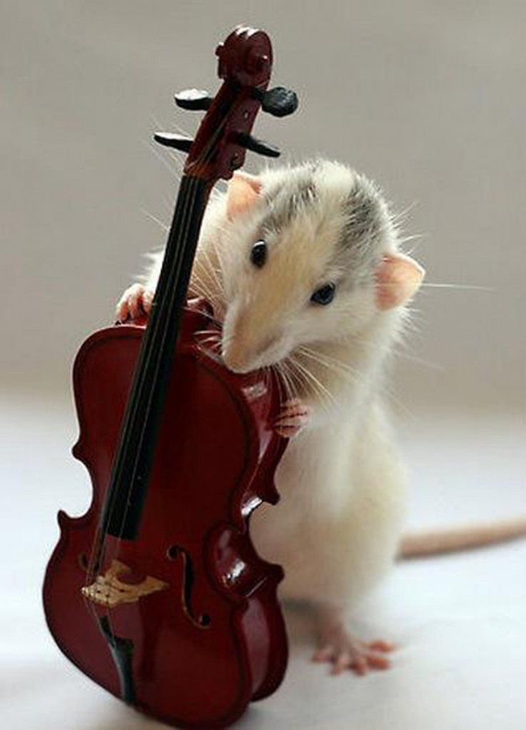 top-10-rats-playing-musical-instruments-L-s60GM0